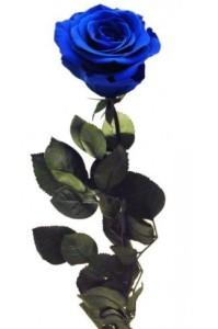 bouquet-de-12-rosas-azules-preservadas