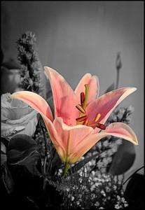 florbncolor
