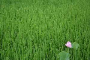 prado-rosa