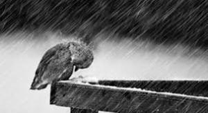 yo-tempestad